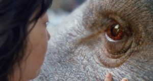 okja trailer 700x300 300x160 - Okja- Trailer @lucymirando #OKJA